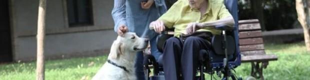Pet Therapy per i nonni della Sedico Servizi